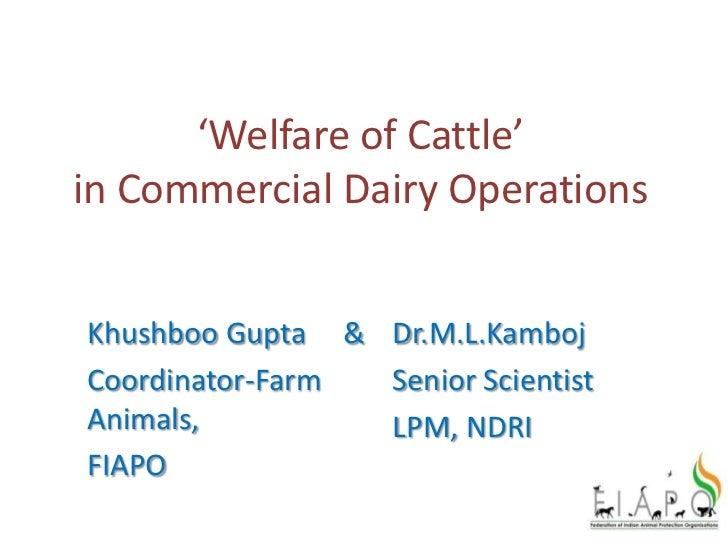 'Welfare of Cattle'in Commercial Dairy OperationsKhushboo Gupta & Dr.M.L.KambojCoordinator-Farm Senior ScientistAnimals,  ...