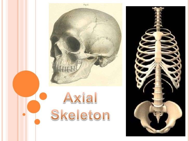 Axial Skeleton<br />