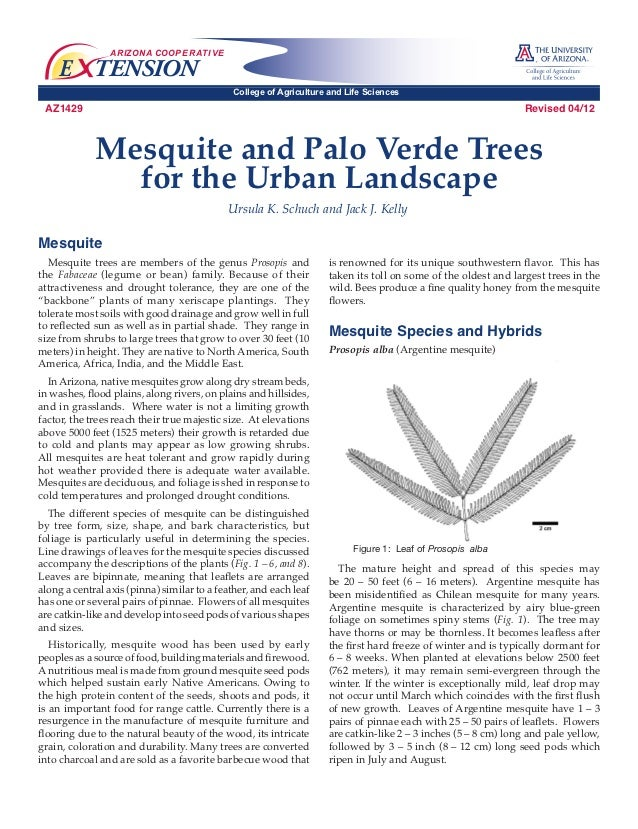 Mesquite and Palo Verde Trees for the Urban Landscape - University of Arizonian