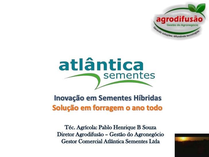 Inovação em Sementes Híbridas<br />Solução em forragem o ano todo<br />Téc. Agrícola: Pablo Henrique B Souza<br />Diretor ...