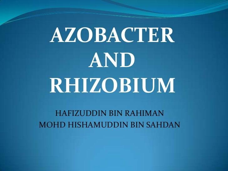 AZOBACTER    AND RHIZOBIUM  HAFIZUDDIN BIN RAHIMANMOHD HISHAMUDDIN BIN SAHDAN