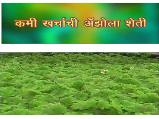 Azolla cultivation.......!