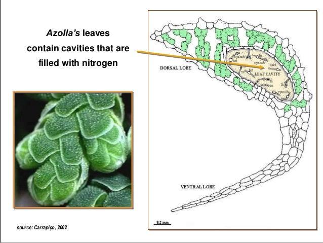 Azolla Event Talk June 2014 Part 2