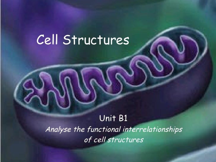 Cell Structures Unit B1 Analyse the functional interrelationships of cell structures