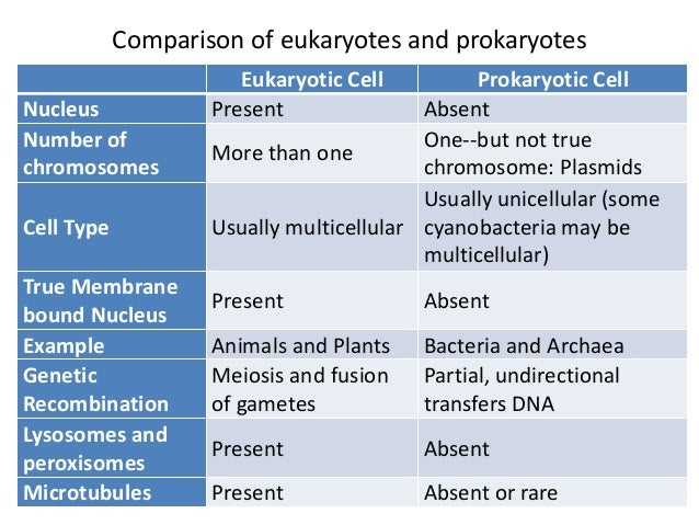 Compare and Contrast Eukaryotic and Prokaryotic Cells
