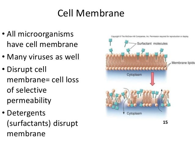 chemicals beetroot membrane permeability What is the permeability of the cell membrane reader mode one of the signature characteristics of all living organisms is that they contain a distinctive mixture of ions and small molecules.