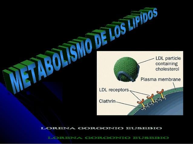 METABOLISMO DE LAS GRASAS Etapas del metabolismo de los lípidos • Movilización.- Ruptura del triglicérido adiposo • Circul...