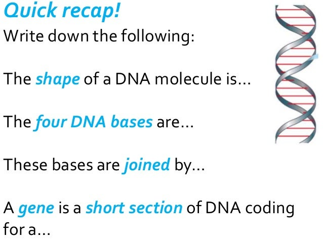 Quick recap! Write down the following:  The shape of a DNA molecule is… The four DNA bases are… These bases are joined by…...