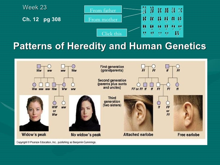 Genetics And Heredity | Free