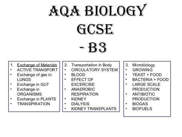 B3 revision