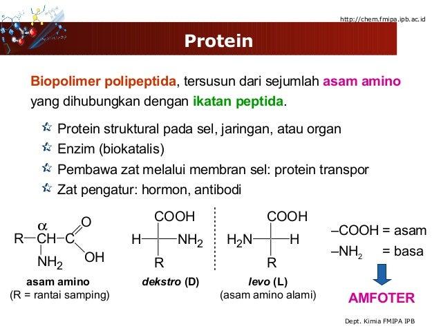 prekursor hormon steroid adalah