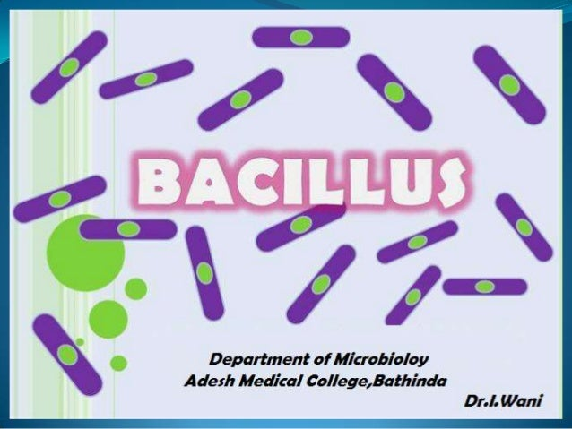 Sporogenous Bacilli Aerobic Bacilli  1.Bacillus anthracis 2.Bacillus cereus 3. Anthracoid bacilli  Anaerobic Clostridia  1...
