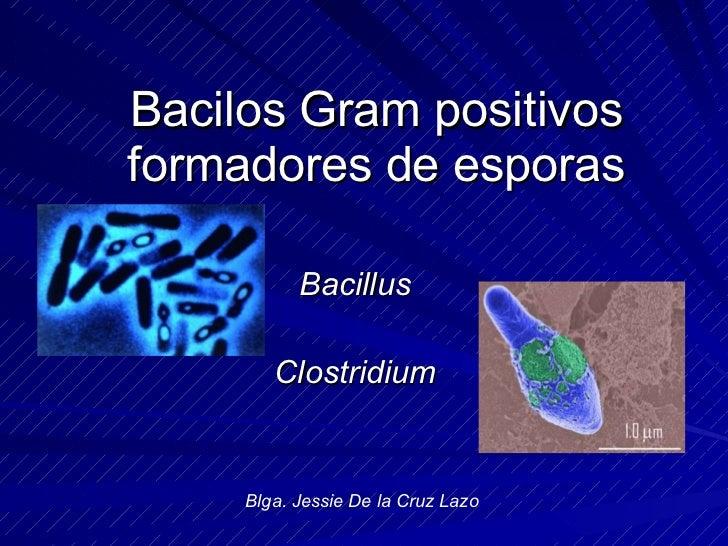 Bacilos Gram Positivos Formadores De Esporas