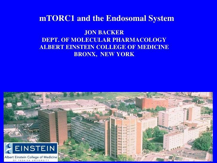 mTORC1 and the Endosomal System JON BACKER DEPT. OF MOLECULAR PHARMACOLOGY ALBERT EINSTEIN COLLEGE OF MEDICINE BRONX,  NEW...