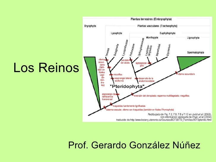 Los Reinos Prof. Gerardo González Núñez