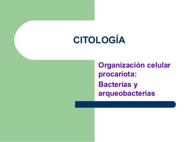 CITOLOGÍA    Organización celular    procariota:    Bacterias y    arqueobacterias