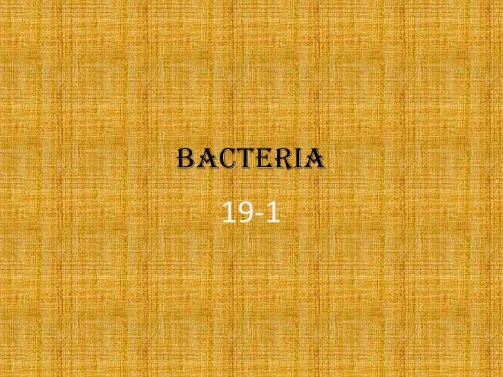 Bacteria<br />19-1<br />