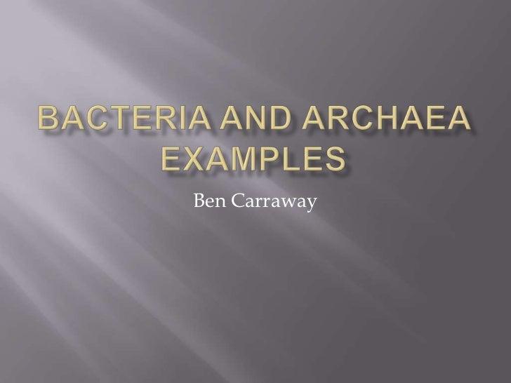 eukarya examples