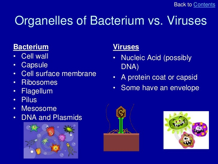 Research papers on bacteria