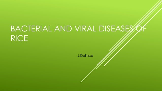 BACTERIAL AND VIRAL DISEASES OF RICE -J.Delince