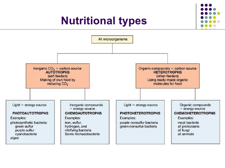 Microbial Growth And Nutrition