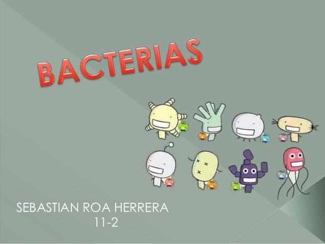 SEBASTIAN ROA HERRERA           11-2