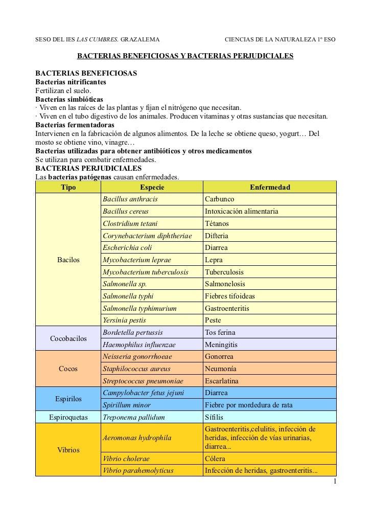 SESO DEL IES LAS CUMBRES. GRAZALEMA                               CIENCIAS DE LA NATURALEZA 1º ESO             BACTERIAS B...
