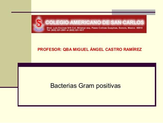 PROFESOR: QBA MIGUEL ÁNGEL CASTRO RAMÍREZ     Bacterias Gram positivas