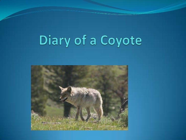 Diary of a Coyote  <br />