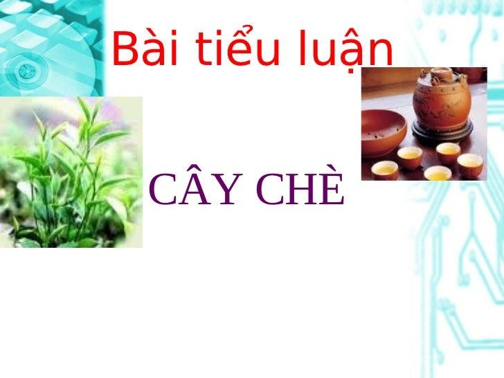 Bài tiểu luận CÂY CHÈ
