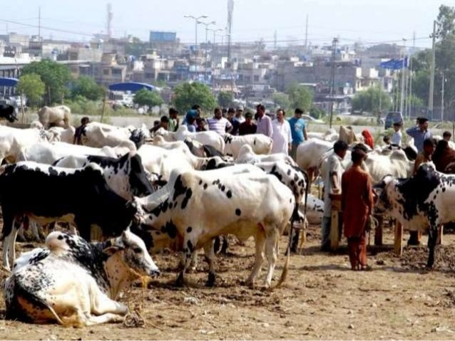 essay on eid festivals in pakistan