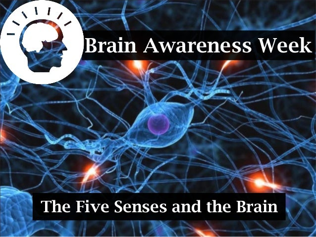 Brain Awareness WeekThe Five Senses and the Brain