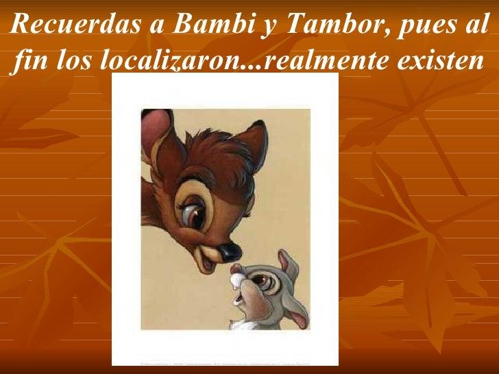 Recuerdas a Bambi y Tambor, pues al fin los localizaron...realmente existen