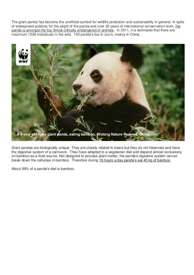 The giant panda has become the unofficial symbol for wildlife protection and sustainability in general. In spiteof widespr...