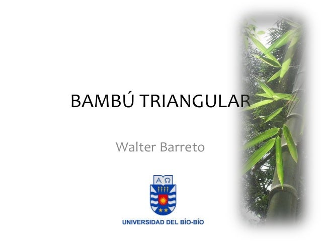BAMBÚ TRIANGULAR Walter Barreto