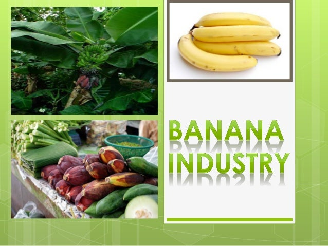 Banana  Banana is the common name for an elongated, edible fruit produced by several kinds of tropical herbaceous floweri...