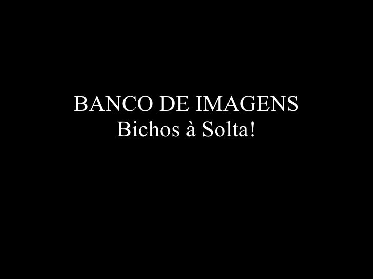 BANCO DE IMAGENS Bichos à Solta!