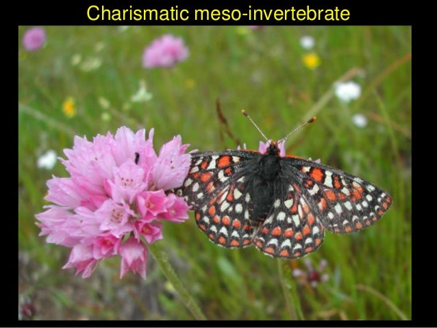 Charismatic meso-invertebrate