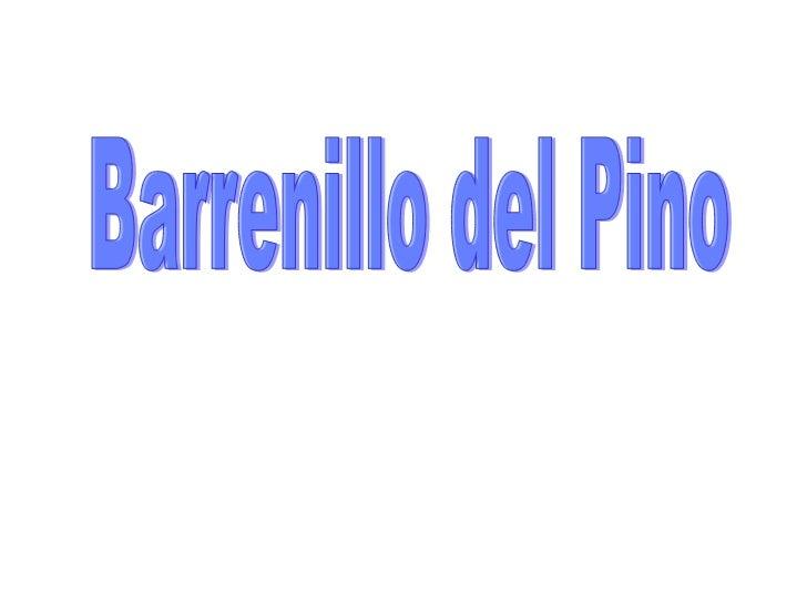 Barrenillo del Pino