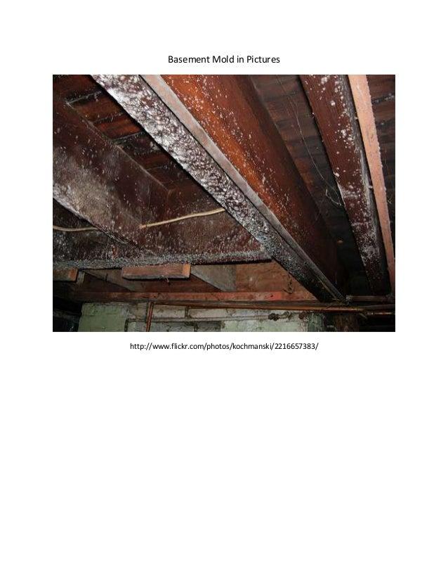 Basement Mold in Pictureshttp://www.flickr.com/photos/kochmanski/2216657383/