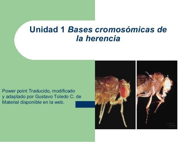 Unidad 1 Bases cromosómicas de                       la herenciaPower point Traducido, modificadoy adaptado por Gustavo To...