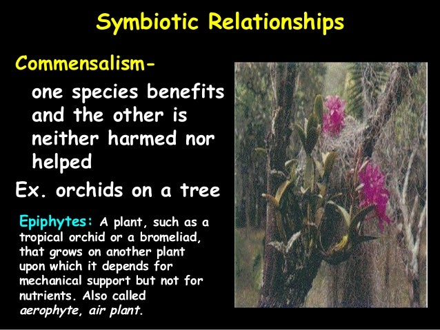 epiphytes and tropical trees symbiotic relationship examples