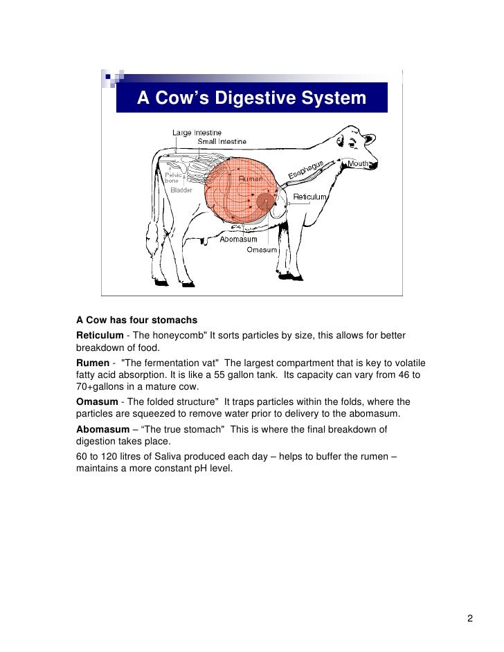 the digestive system essay The human digestive system is responsible for the intake, breakdown, absorption and finally removal of nutrients and energy needed for the f.