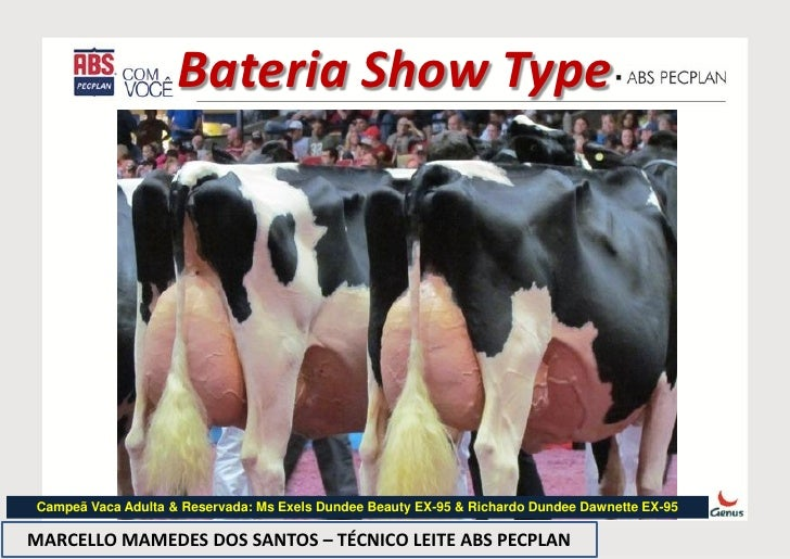 Bateria Show TypeCampeã Vaca Adulta & Reservada: Ms Exels Dundee Beauty EX-95 & Richardo Dundee Dawnette EX-95MARCELLO MAM...