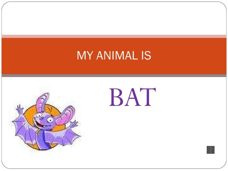 MY ANIMAL IS BAT