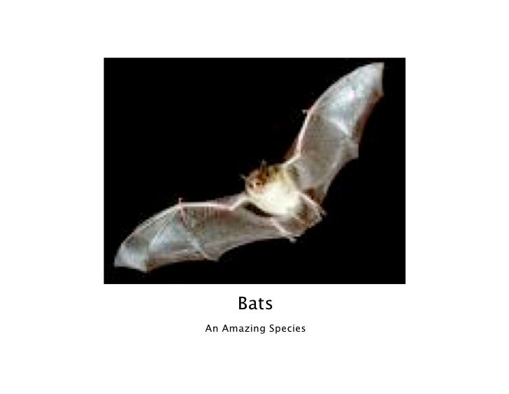 Bats An Amazing Species