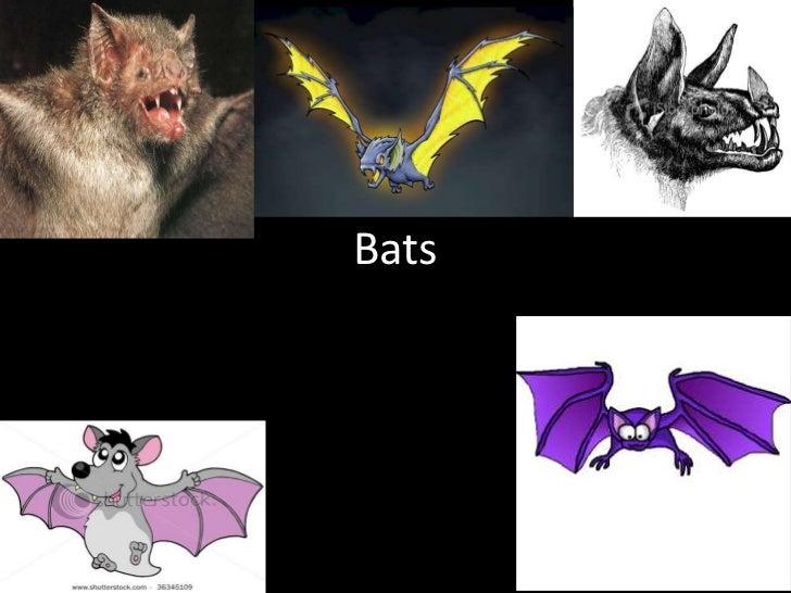 Bats<br />