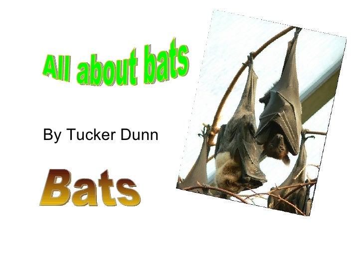 By Tucker Dunn All about bats Bats