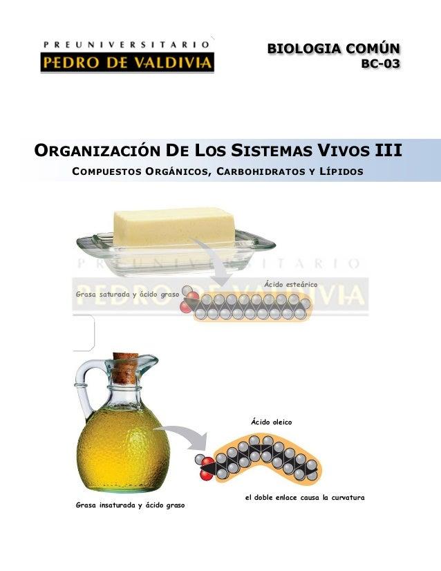 Organización de los sistemas vivos III: Compuestos Orgánicos, Carbohidratos y Lípidos (BC03 - PDV 2013)