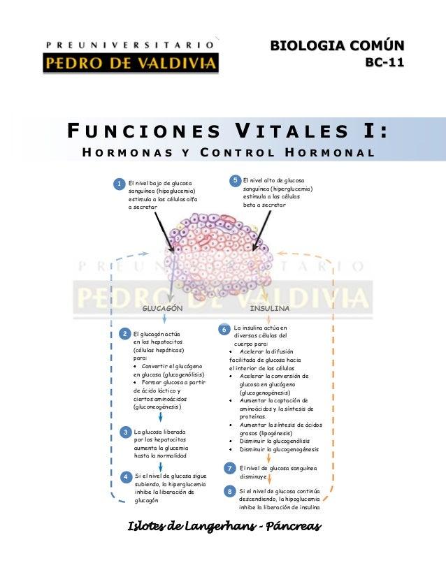 BIOLOGIA COMÚN BC-11  FUNCIONES VITALES I: HORMONAS Y CONTROL HORMONAL 5 El nivel alto de glucosa  El nivel bajo de glucos...